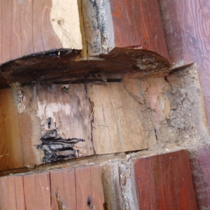 Log Home Rot Repair